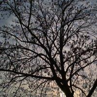 Узор дерева. :: Андрий Майковский