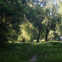 В преддверии лета ... :: Игорь Малахов