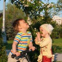 Яблоня в цвету :: Дарья Наумова