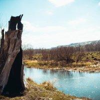 Где-то в Белгородской области :: Дарья Шевцова