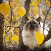 коты улетают :: Наталья