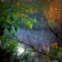Утром ранним на реке . :: Мила Бовкун