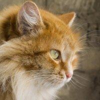 Кошачий взгляд :: catonbox