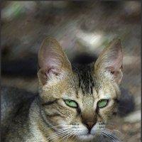 Котяка-из серии Кошки очарование мое! :: Shmual Hava Retro