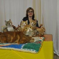 Выставка кошек :: Олег Платонов