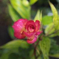 Цветочный хоровод-130. :: Руслан Грицунь