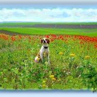 Оно такое необычное – это лето! В нем много солнышка и много-много цвета! :: Людмила Богданова (Скачко)