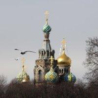 Храм Спаса-на-Крови :: Екатерина Комарова (Седых)