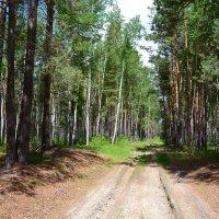лесовозные дороги :: сергей