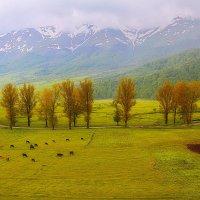 Зелень + снег... :: M Marikfoto