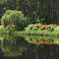 Природа :: Михаил Новиков