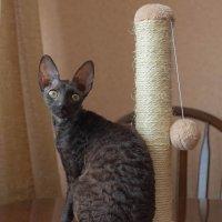 Кошка с когтеточкой :: Елена Ахромеева