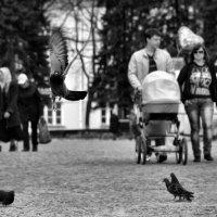 Просто фотография :: Дмитрий Воронин