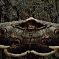 Ночные бабочки ... :: Игорь Малахов