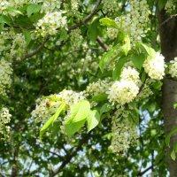 Весна в Орле. :: Наталья Малышева
