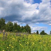Подмосковный пейзаж. :: vkosin2012 Косинова Валентина