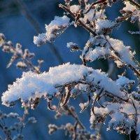 Краски зимы :: Наталья