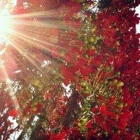 Цветы и солнце. :: Valentina Severinova