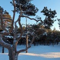 Северодвинск. Разные дни у Белого моря. Бор :: Владимир Шибинский