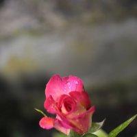 Цветочный хоровод-135. :: Руслан Грицунь