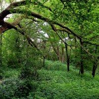 по тропинке в лес :: Alexander