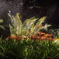 Свет, вода, лето :: Alexander Andronik