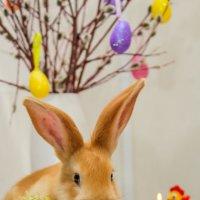 впервые видела кролика таким цветом :: Елена Вострикова    Оренбуржье