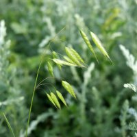 Травы, травы,травы... :: nika555nika Ирина