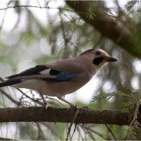 bird4 :: yameug _