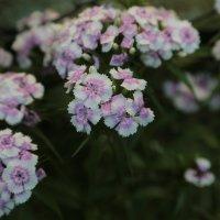 Цветочный хоровод-136. :: Руслан Грицунь