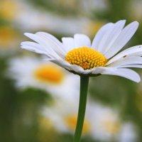 Белки и желтки :: Alexander
