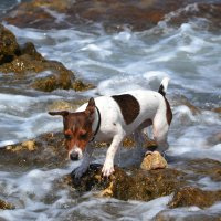 Морская собачка :: Виктор Фин