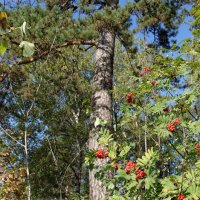 и на камнях растут деревья... :: Вячеслав Криволуцкий