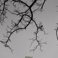 Небесные артерии :: Ivan teamen