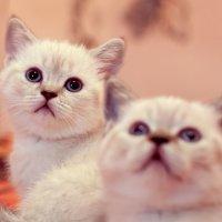 Котятки :: Елена Васильева