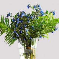 Цветы полевые :: Юрий Дмитриенко