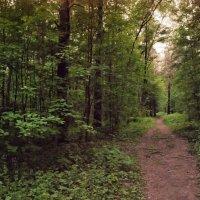 прогулка в лесу :: Денис Масленников