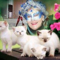 фотоколлаж с котятами :: Алексей Полковников