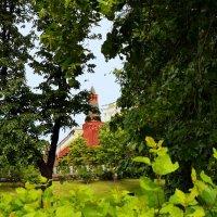 На опушке леса :: Владимир Болдырев