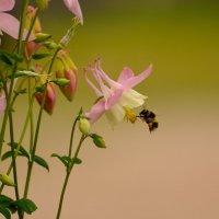 Любимый цветок :: Laimis S