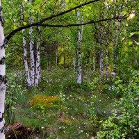 Русский лес :: Елена Третьякова