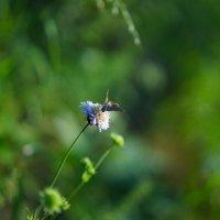 Бабочка :: Ирина Остроухова