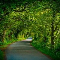 Зелёный туннель :: Евгений Фомин