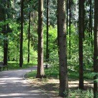 Дорожка в парке :: Ирина Н