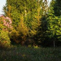 Майский вечер в саду :: Константин Фролов