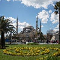 Голубая мечеть  (Султанахмет) :: Марат Рысбеков