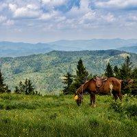 На вершине горы Тростян (Карпаты) :: Владимир Хижко