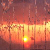 солнечный фонтан :: Дмитрий Проскурин
