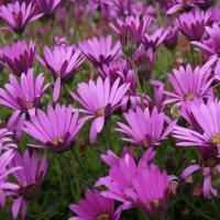 Цветы мая :: Natalia Harries