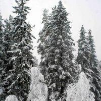 Три белых коня :: Ekaterina Karbo